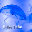 "EXCLU WEB - BILLET ""TRIBU 2017"""